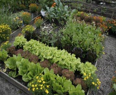 The Fall Vegetable Garden September 3 Seacoast Eat Local