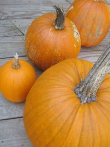 pumpkins-_on_deck
