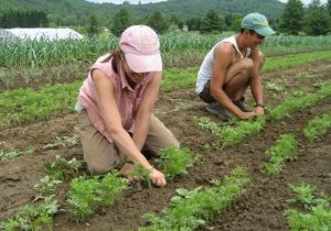 foodCropmobplant