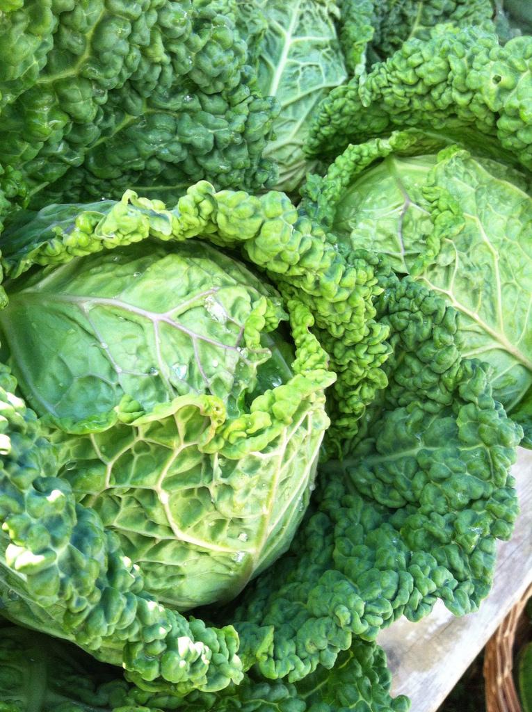 Stout Oak Farm savoy cabbage