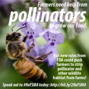 2013_11_FSMA_conservation_pollinators_graphic