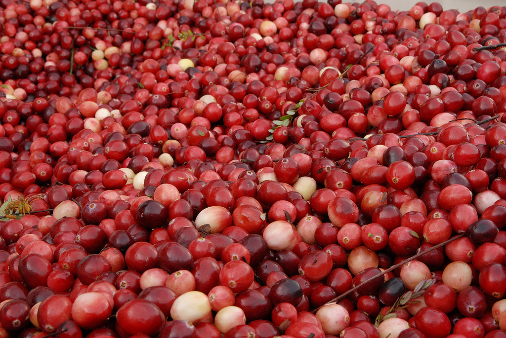 Cranberries are the best for thanksgiving http://www.flickr.com/photos/29682030@N00/