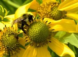 Bee-2-250x183
