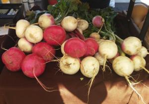 scarlet turnip