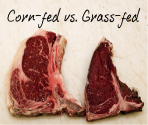 http://rampages.us/evonut/2014/10/12/grass-fed-beef-from-a-small-local-farm/