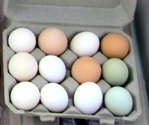 mixedcoloreggs mona farm