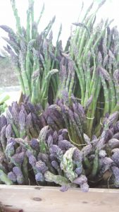 Farm fresh asparagus is in season now at the Seacoast Growers Association markets