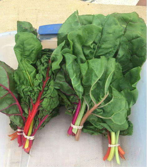 Swiss chard, photo by Caitlin Porter