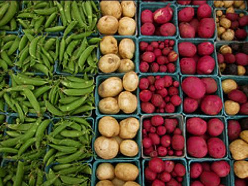 Wake Robin Farm vegetables, photo by Caitlin Porter